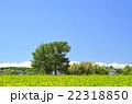 植物 風景 茶畑の写真 22318850