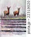 奈良の鹿 春日大社 22319020
