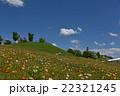 ポピー咲く丘 22321245