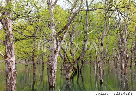 白川ダムに生える木達 22324238