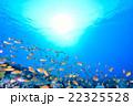 モルディブの海 22325528