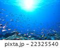 モルディブの海 22325540