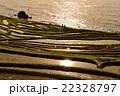 白米千枚田 世界農業遺産 棚田の写真 22328797
