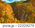 宮城県 大崎市 鳴子峡 22329279