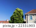 瓦屋根と青空 22331903