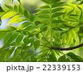 新緑と木漏れ日 22339153