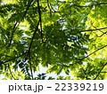 新緑からの木漏れ日 22339219