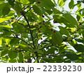 新緑と木漏れ日 22339230