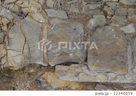信州 松本 クジラ化石 県天然記念物指定 発見されたまま現地保存されている化石 拡大 22340059