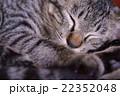 眠る猫 22352048