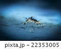 水に浮く羽化したばかりの蚊 22353005