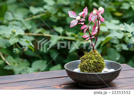 苔盆栽 22353552