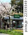 江ノ電極楽寺駅と桜 22359349