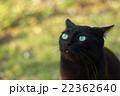 黒猫 22362640