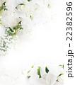 背景 花 薔薇のイラスト 22382596