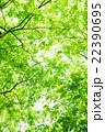 新緑 22390695