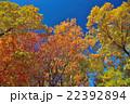 雑木林の秋 22392894