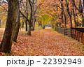 林の小道 22392949