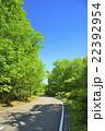 別荘地・春の道2 22392954