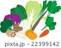 冬の野菜 22399142