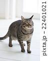 上を見る猫 22401021