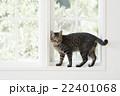窓辺の猫 22401068