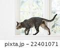 窓辺の猫 22401071