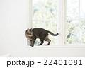 窓辺の猫 22401081