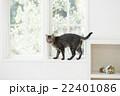 窓辺の猫 22401086