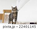 猫 22401145
