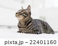 上を見る猫 22401160