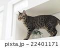 猫 22401171