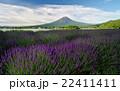 富士山 花畑 ラベンダー畑の写真 22411411