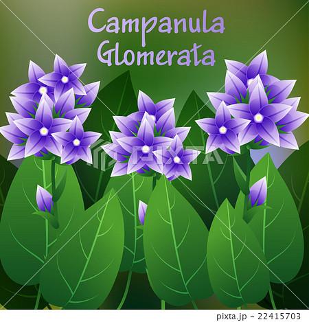 Beautiful flower illustration of campanula glomer beautiful flower illustration of campanula glomer voltagebd Gallery