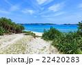 阿嘉島 海 夏の写真 22420283
