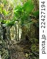 バリバリ岩 22427194