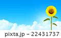 向日葵 夏 花のイラスト 22431737