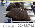 ふのり 海苔 海草の写真 22433748