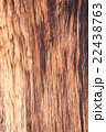 Big Brown wood plank wall texture background 22438763