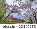 岩手山 桜 桜並木の写真 22440253
