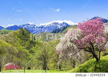 春の高原 22440254