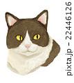 猫 はちわれ 動物のイラスト 22446126