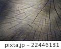 【テクスチャ】木の断面 22446131