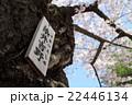 染井吉野の札 22446134