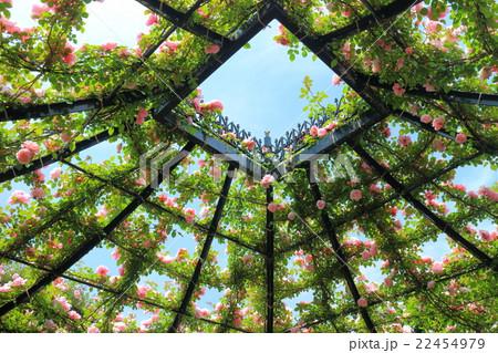 横浜イングリッシュガーデンの薔薇 22454979