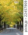 銀杏並木 22457909