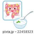 乳酸菌 ヨーグルト 腸のイラスト 22458323