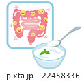 乳酸菌 ヨーグルト 腸のイラスト 22458336