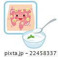 乳酸菌 ヨーグルト 腸のイラスト 22458337