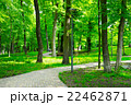 公園 自然 木の写真 22462871